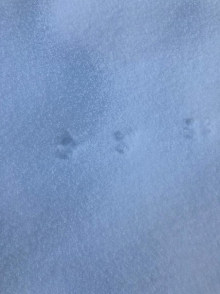 seltsame Spuren im Schnee