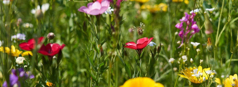 Ausbildung zum Naturtherapeuth